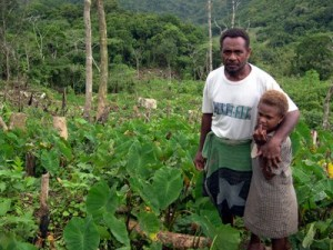Johnson Ladota is a coordinator for the highlands area of North Malaita under the KGA partner Baetolau Farmers Association. Johnson is an active farmer himself - seen here in his highlands taro garden.