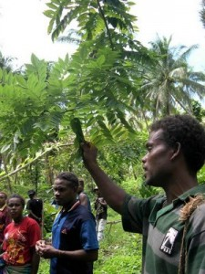 Youths learn about glyricidia trees and their role in fixing nitrogen into the soil