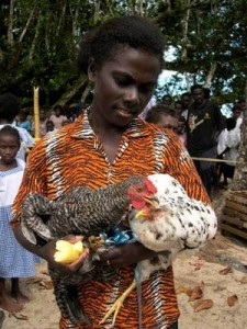 Young girl raising chickens in Sasamuqa. The Youth Component supports all areas of KGA farmer services to have a youth and young farmer focus